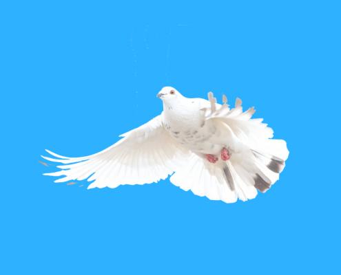 Mit Hilfe der Friedensmeditation kann Mitarbeiter Ruhe und Frieden fühlen